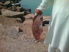 daam balochistan