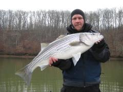 December Striped Bass