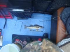 Walleye 2
