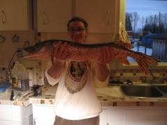this is my pike for today 29 inchs long .