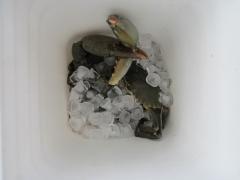 A cold crab