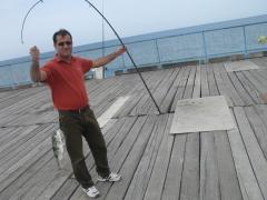 Puffer fish - siraf port