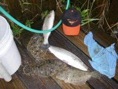 FL. Beach Flounder And Beach Trout