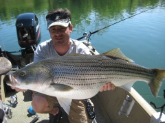 Striped Bass/ TN.