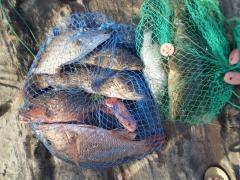 Fishing Update... Today's Catch @ Marina Mall