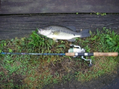 Bass fishing
