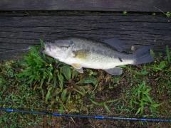 bass fishing from shore