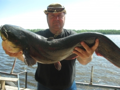 young catfish 12 kg