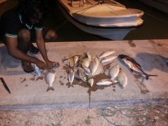 todays catch
