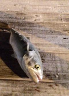 1fish,2fish, red fish, BLUE FISH.