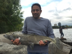 18 pounder Salmon caught off the shore