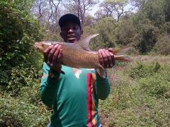 First time carp