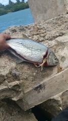 Same fish, other pfofile