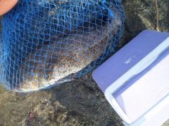 MARINA MALL BREAKWATER FISHING 16Sept2016