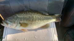 Big Bass of the day. 4.96 pounds for the Human Seine