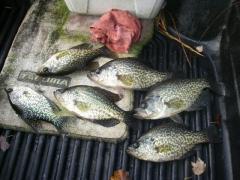 Crappie Fishing 11-3-16
