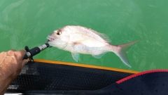 love those fish lip grippers for easy release