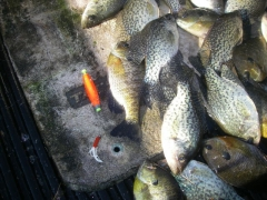 1/16th jig with tube bait under a weighted bobber for crappie.