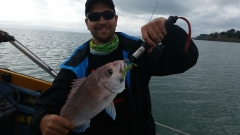 Fun day soft baiting for snapper off a boat