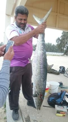 The Great King Fish 19 KG at Jubail Fanateer
