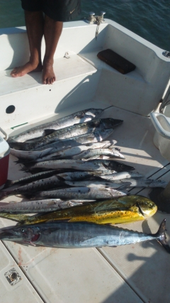Whaoo Mahi Mahi and Barracuda
