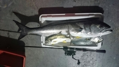 Light Tackle Lure Fishing.