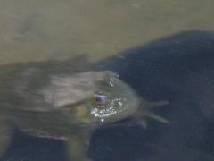 Frog makes me company