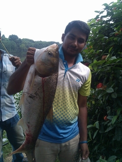 8KG WILD SILVER CARP, FROM DHAKA.