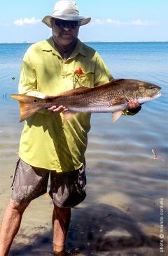 Red with live bait, Ghandy Bridge, St. Pete, FL