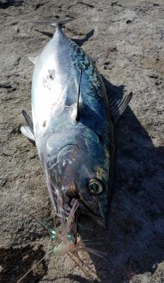Mac tuna