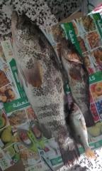 MARINA MALL BREAKWATER FISHING 23June2017