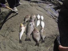 Shore fishing,S.Ca