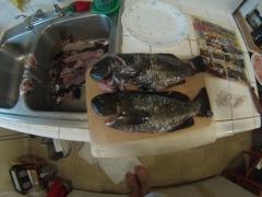Shore Fishing,Southern Ca 10-11-17