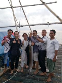 sailfish, ikan layaran