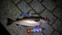 New year catch (01/01/18) 2AM