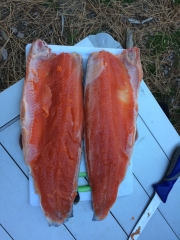 amazingly red rainbow trout fillets