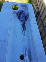 Monster squid