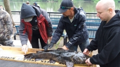 """""""Top Cat"""" for May Stony Creek Anglers Catfish Derby"""