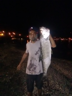 nice tarpon. St.Pierre beach, Martinique