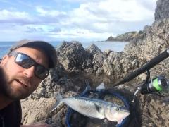 todays catch - kahawai / australian salmon off the rocks