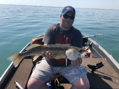 Lake St Clair Walleye