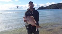 Nice fat 50cm winter snapper - caught on mussel bait