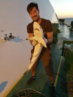 Black Tip Reef Shark, 6Kg