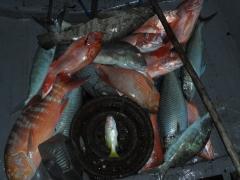 fishing in Kavieng