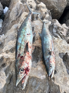 Abu Dhabi fishing!