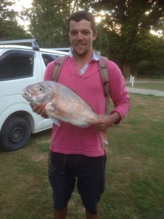 Golden bay snapper