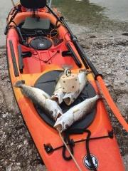 Spec Trout catch