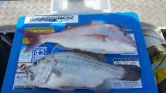 2 good fish