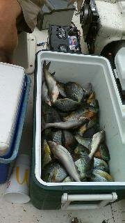 Bream, Shell Crackers, War Mouth, Catfish