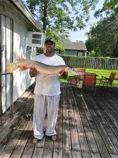 Saltwater Alligator Gar